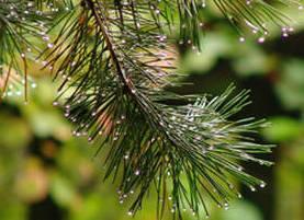 травы для чистки сосудов от холестерина