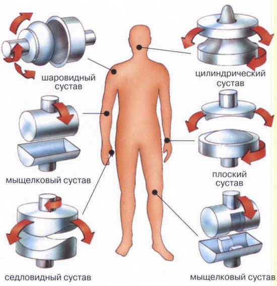 Stroenie-sustavov