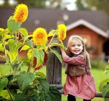 Польза и вред семечек подсолнуха для детей
