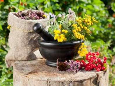 Как правильно собирать лекарственные травы