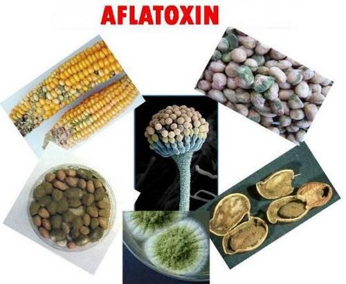 Опасные афлатоксины в продуктах питания. Как защитить себя от плесени!