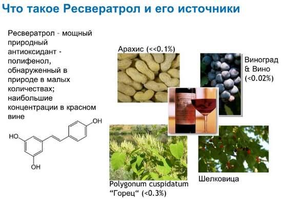Ресвератрол в каких продуктах содержиться