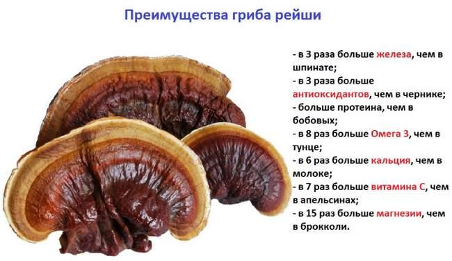 Польза гриба Рейши