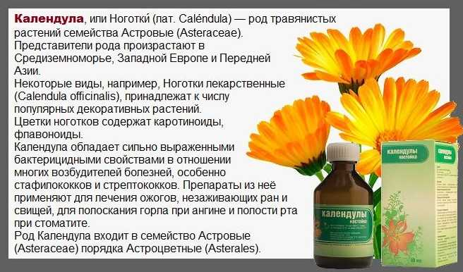 Полезные свойства календулы