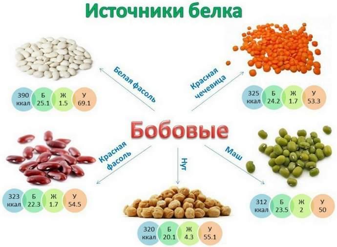 Источники белка бобовые