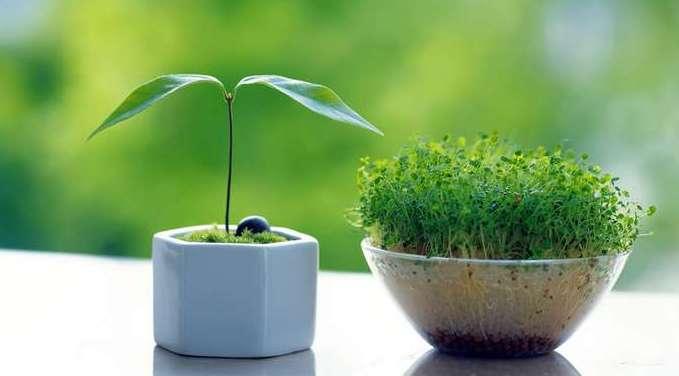 Функция фитиновой кислоты для растений