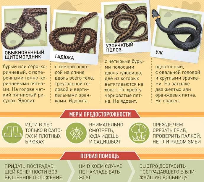 ядовитые змеи России